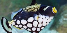 Diese fünf Fische tragen eine Maske