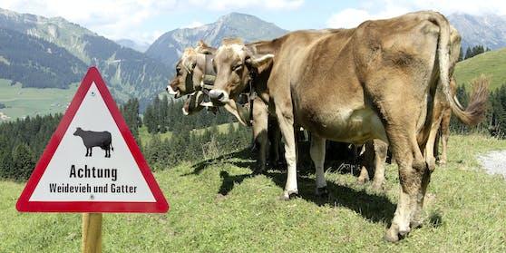 Kühe sind friedfertige Wesen – außer sie fühlen sich bedroht.