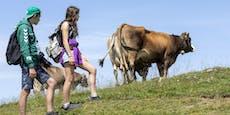 3 goldene Regeln, um eine Kuh-Attacke zu vermeiden