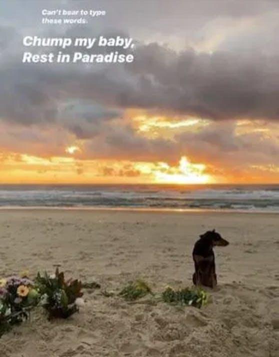 Rummi wartet auf die Rückkehr des verstorbenen Herrchens.