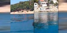 Wieder Wal in Kroatien, nur wenige Meter neben Strand