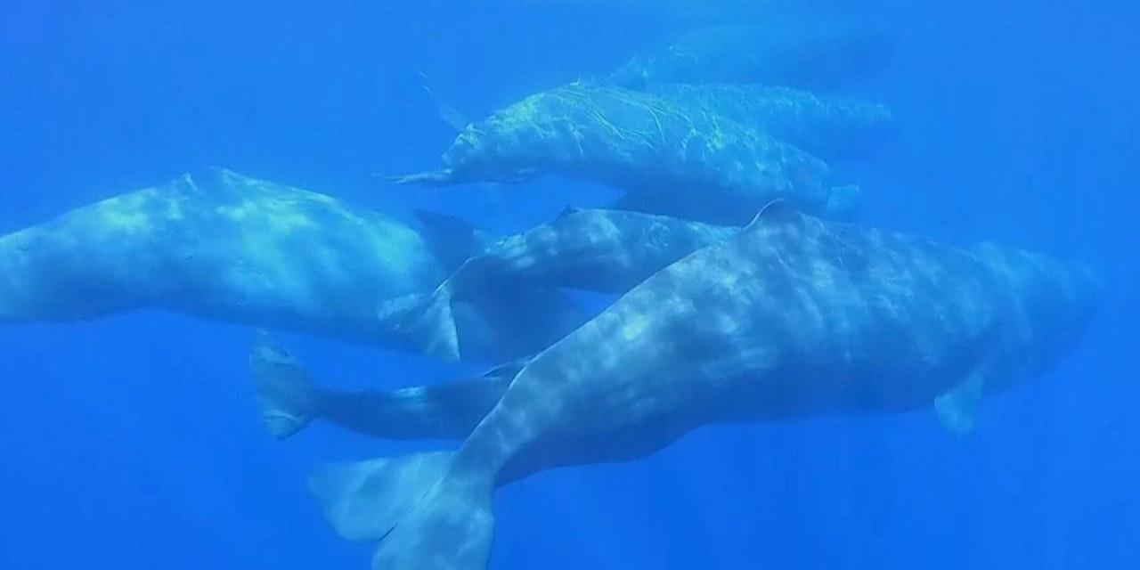 Video zeigt auch Wale vor Stränden Italiens
