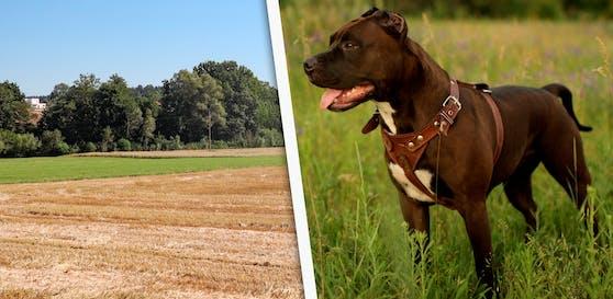 In diesem Wald wurde der Hund, ein American Stafford Terrier erschossen.