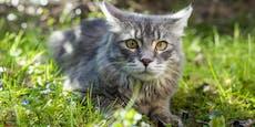 Katze kommt heim und bringt verstörende Nachricht mit