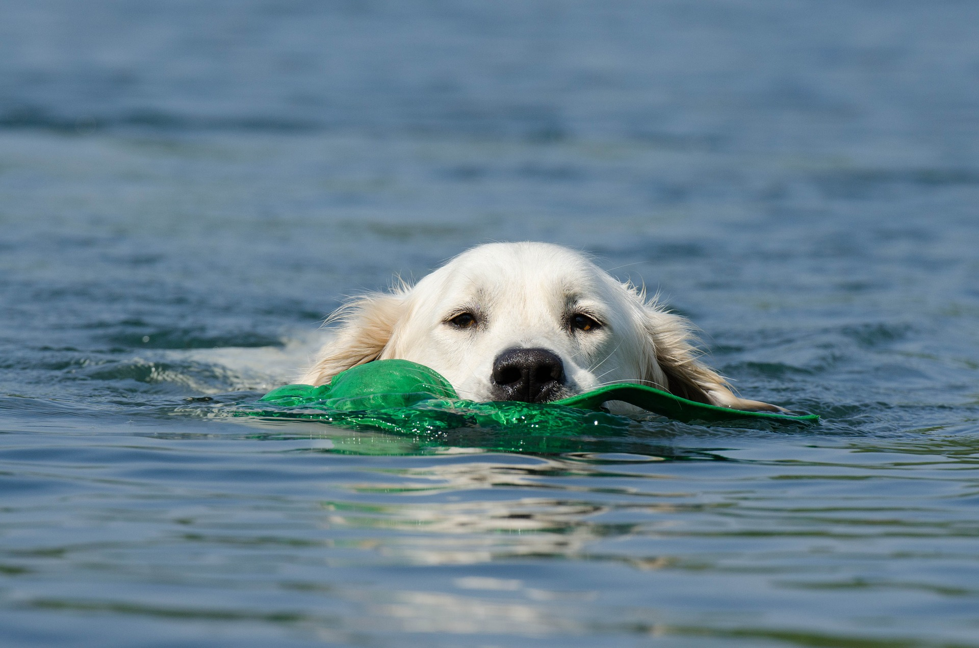 Badespaß kann für Hunde tödlich enden