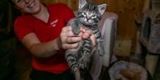 Kein Platz am Bauernhof - Babykatzen mussten weg
