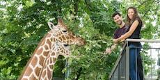 """In Schönbrunn darf man jetzt Giraffen """"verführen"""""""