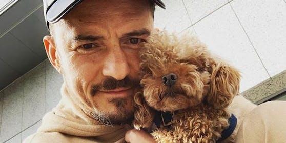 Orlando Bloom war sieben Tage lang auf der Suche nach seinem Hund Mighty. Die Chance, ihn wiederzusehen, hat der Schauspieler aufgegeben.