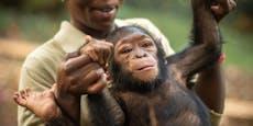 Affen-Waisenkinder finden hier ein neues Zuhause