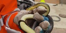 Riesen-Schreck auf Autobahn, Schlange auf Frontscheibe
