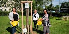 Stadt sucht nun Hobby-Gärtner als Baumpaten