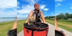 Streunende Katze erkundet die Welt vom Fahrrad aus