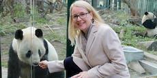Ministerin Schramböck sorgt für neues Panda-Futter