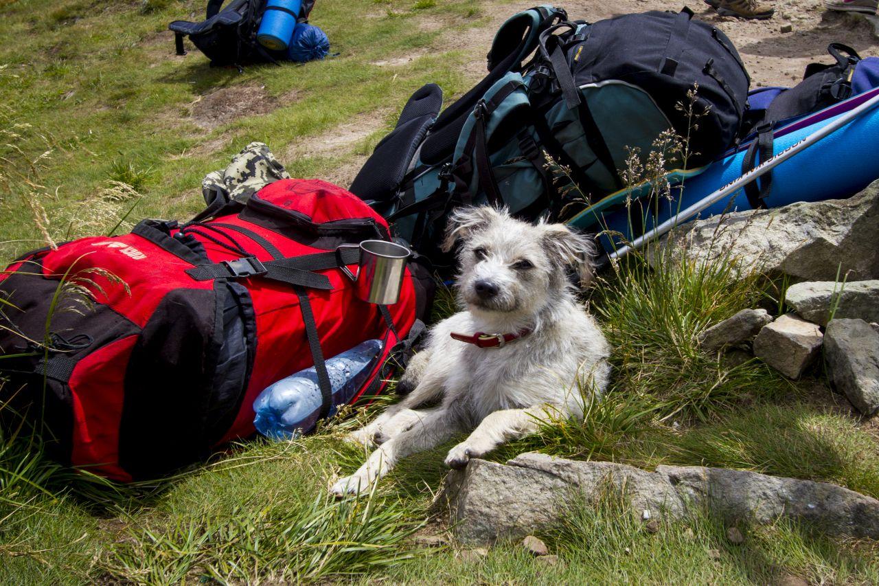 Urlaub mit Hund - das musst du beachten