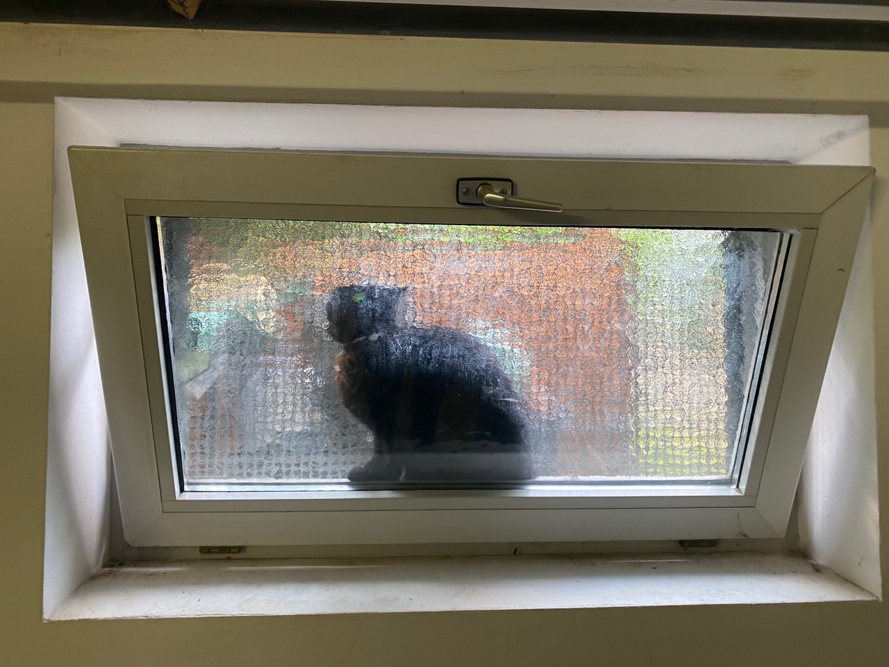 Hund trieb Katze in die Enge - Endstation Kellerfenster