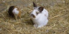 Kaninchen erschlagen, Polizei sucht nach Tierquäler