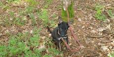 Blinder Welpe im Wald zum Sterben zurückgelassen