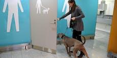 Eine Erleichterung: Airport baute Klos extra für Hunde