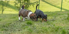 Demenz zwang Frau, sich von ihren Hunden zu trennen