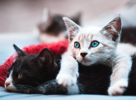 Ein neuer Fall von Katzen-Quälerei sorgt für Fassungslosigkeit.