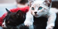Katzen lebendig verbrannt, ertränkt und begraben