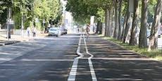 Dieser Radweg schlängelt sich durch die Donaustadt