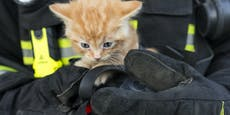Feuerwehr macht bei Katzenrettung schlimme Entdeckung