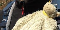 50 Euro Finderlohn für Stoff-Schaf der kleinen Alma