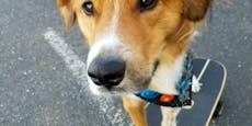 Flott unterwegs: Hund lernt im Lockdown ein neues Hobby