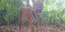 Diese Aufnahmen lassen Artenschützer jubeln