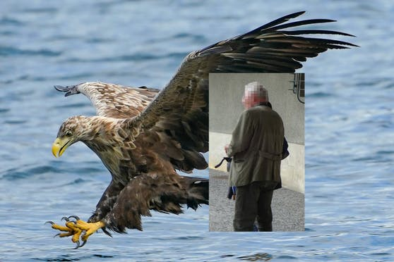 Auch einen Seeadler soll der Jäger vergiftet haben.
