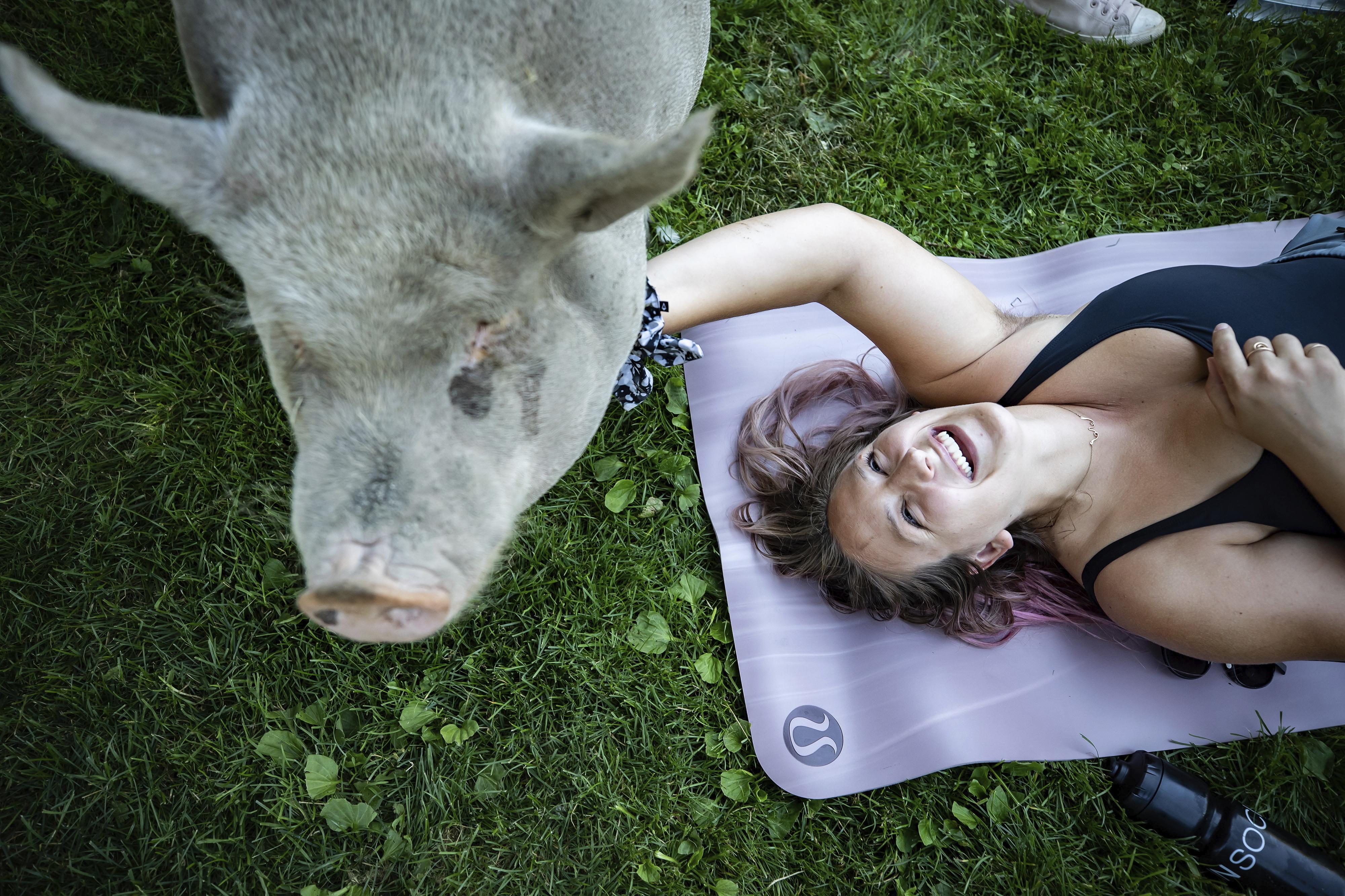 Ziegen-Yoga ist so 2019, heuer sind die Schweine dran
