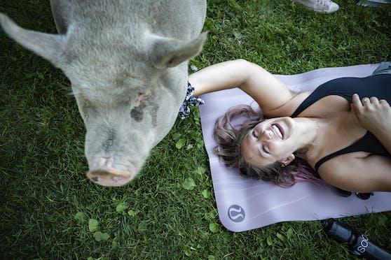 Schweine-Yoga für einen guten Zweck.