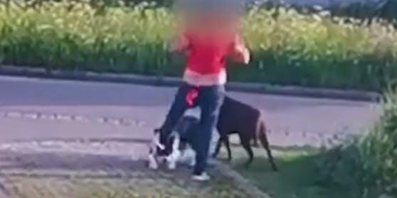 Auf einem Video ist zu sehen, wie die Frau mehrmals auf ihren Hund eintritt.