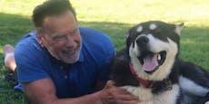 Arnies neuer Hund hat Angst vor Esel Lulu