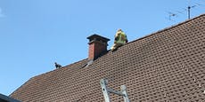 Katze saß mehrere Tage auf Dach fest