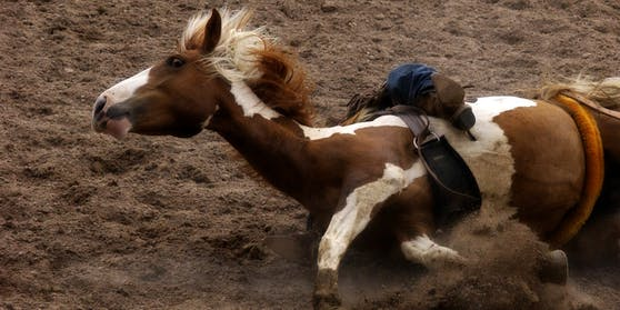 Symbolfoto eines gestürzten Pferdes.