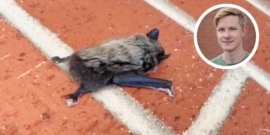 Video zeigt Ö3-Redakteur als Fledermausretter