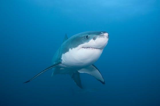 Es ist bereits die achte Hai-Attacke in Australien in diesem Jahr.