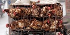 China will Lebendverkauf von Geflügel verbieten