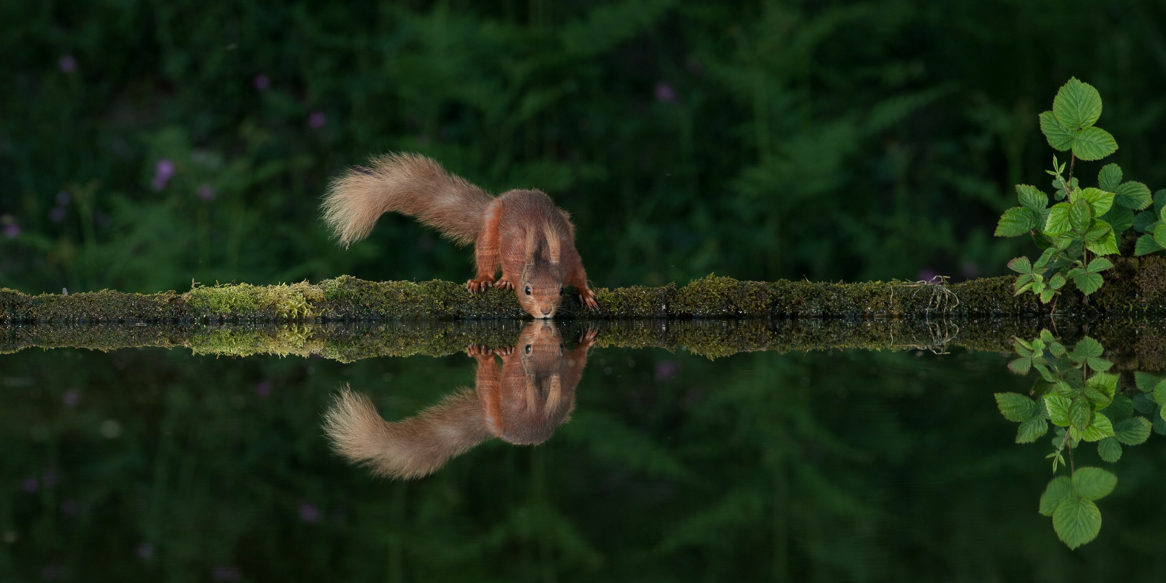 10 Magische Tier-Spiegelungen, die uns verzaubern