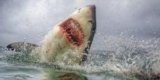 Weißer Hai reißt Kind (10) von Fischerboot insMeer