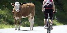 Jäger erschießt ausgebüxte Kuh in Kitzbühel