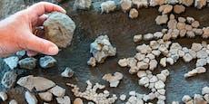 Sensation: 11 Millionen Jahre alte Schildkröte entdeckt
