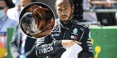 Formel-1-Star Hamilton ernährt seinen Hund vegan