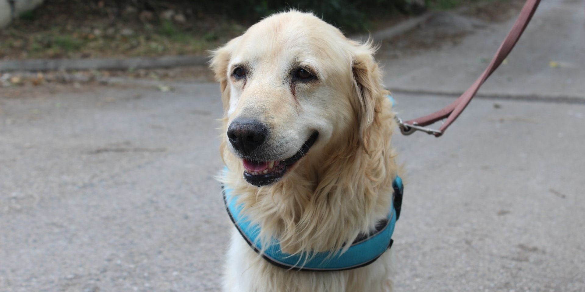 Hunde-Opa irrte durch Mödling - Besitzer gesucht