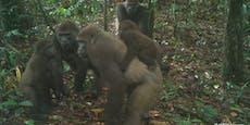 Diese Affen-Fotos sind weltweit eine Sensation