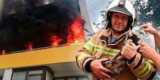 Feuerwehr rettet Katze aus diesem Flammeninferno