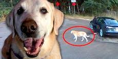 Verstoßener Hund wartet stundenlang auf sein Frauchen