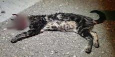 Tierquäler drücken Katze Auge aus